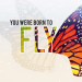 fly-series